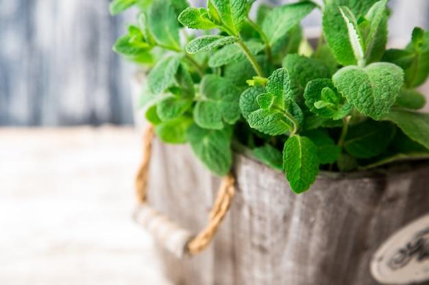 Grupo da folha orgânica verde fresca da hortelã no close up de madeira da tabela. foco seletivo. hortelã.