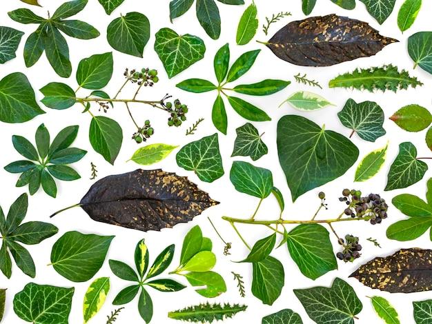 Grupo da vista superior de folhas verdes e flores