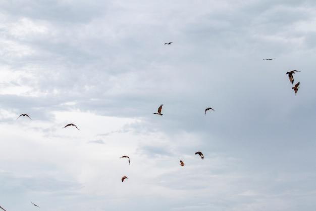 Grupo de águia vermelha no céu na natureza na tailândia
