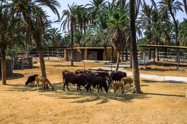 Grupo de animais comendo suas refeições no abrigo de um zoológico