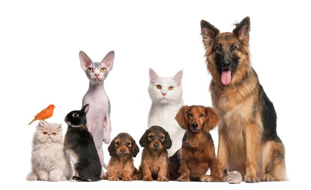 Grupo de animais de estimação: cão, gato, pássaro, coelho