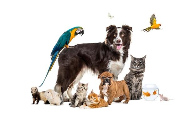 Grupo de animais de estimação posando em torno de um border collie; cachorro, gato, furão, coelho, pássaro, peixe, roedor