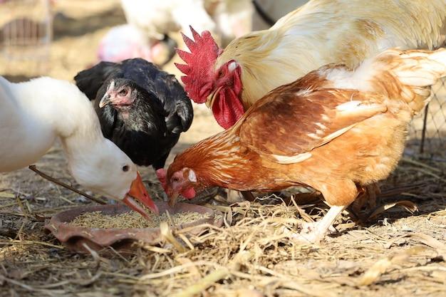 Grupo de animais de fazenda comendo