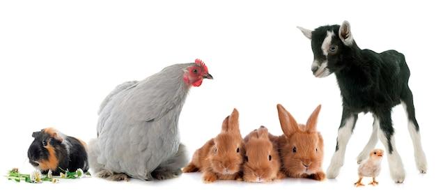 Grupo de animais de fazenda