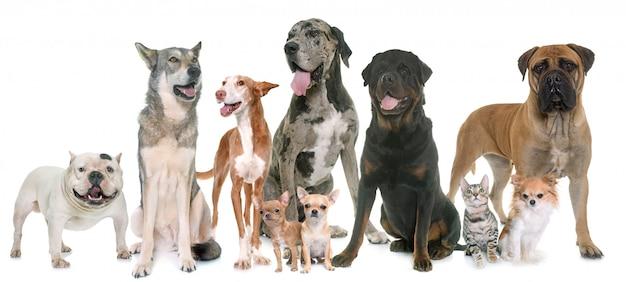 Grupo de animal de estimação