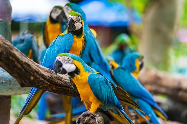 Grupo de arara colorida em galhos de árvores