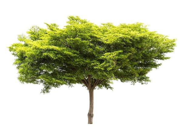 Grupo de árvore isolado no fundo branco para material de design