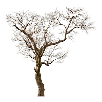 Grupo de árvore morta isolado no fundo branco