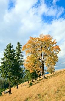 Grupo de árvores solitárias nas montanhas dos cárpatos de outono
