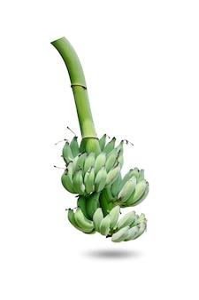 Grupo de bananas verdes verdes colhidas no mesmo galho, isolado no fundo branco.