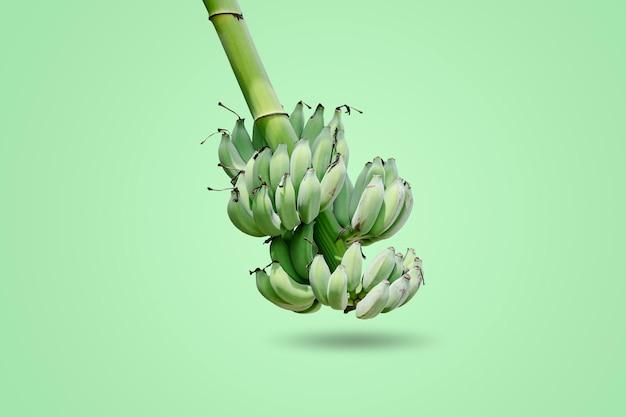 Grupo de bananas verdes verdes que são coletadas no mesmo galho isolado sobre fundo verde.