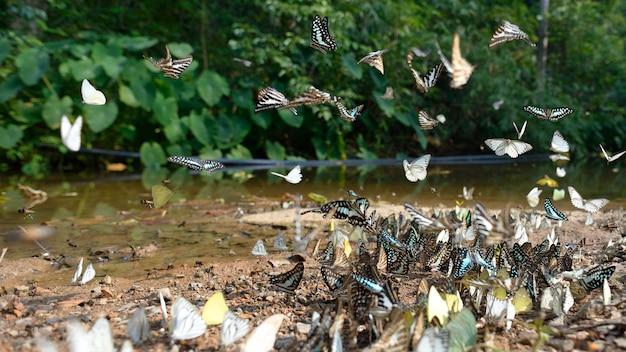 Grupo de borboletas