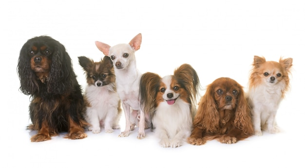 Grupo de cachorrinhos