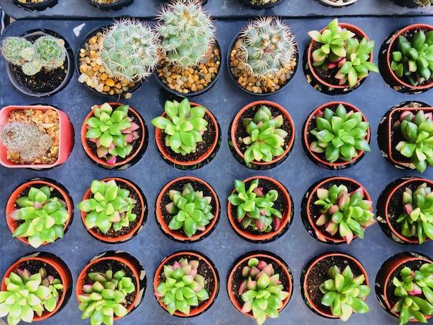 Grupo de cacto em vaso de flores