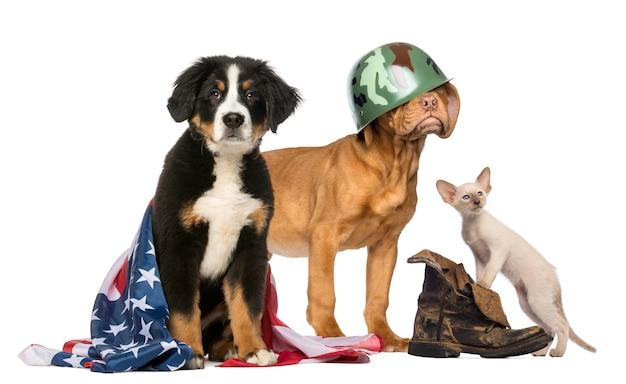 Grupo de cães e gatos patrióticos