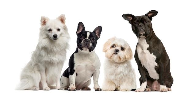 Grupo de cães em frente a uma parede branca