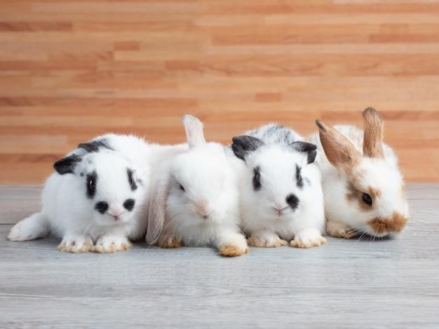 Grupo de coelho bebê fofo deitado na mesa de madeira.