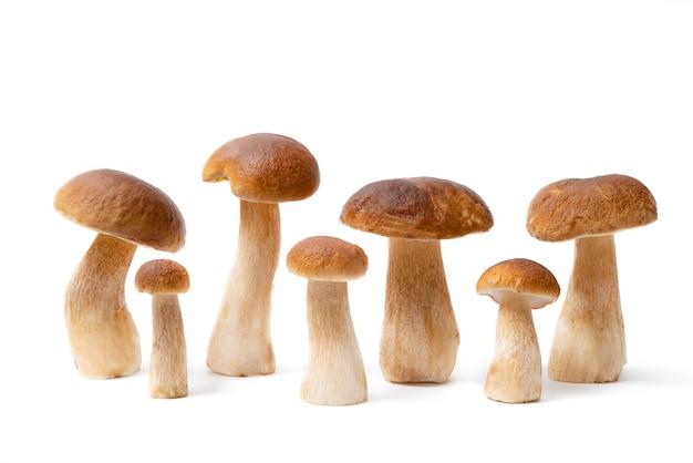 Grupo de cogumelos boletus cap marrons isolado no fundo branco