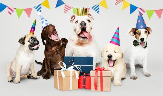 Grupo, de, filhotes cachorro, celebrando, um, ano novo
