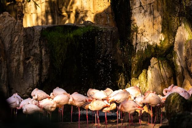 Grupo de flamingos cor-de-rosa em um jardim zoológico.