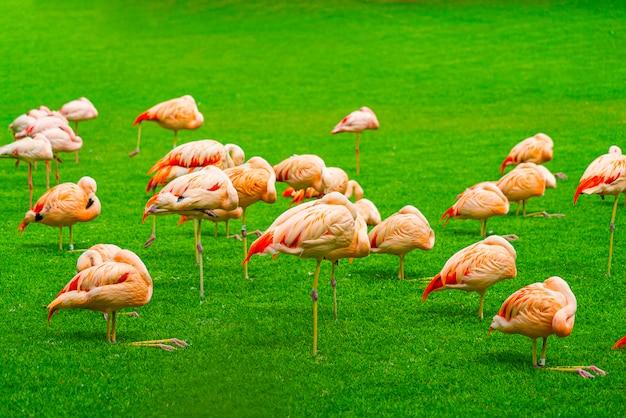Grupo de flamingos lindos dormindo na grama do parque