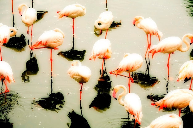 Grupo de flamingos na lagoa