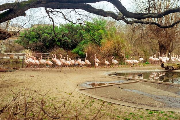 Grupo de flamingos vadear em uma lagoa em um dia ensolarado