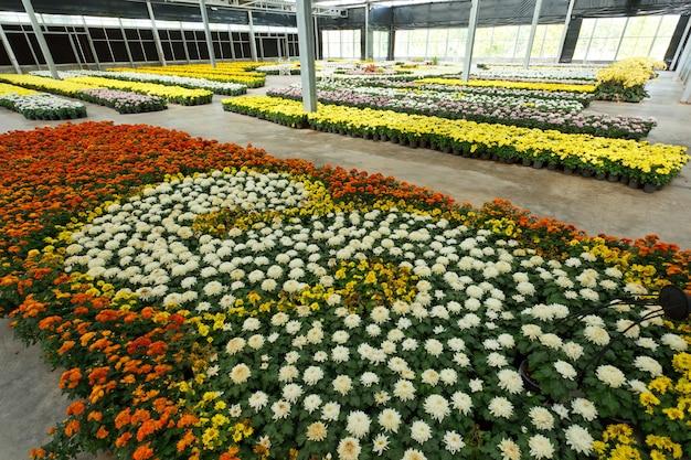 Grupo de flores coloridas em casa de vidro