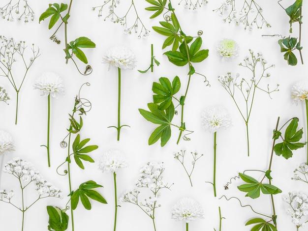 Grupo de folhas e flores de vista superior