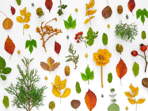 Grupo de folhas verdes com flores na vista superior