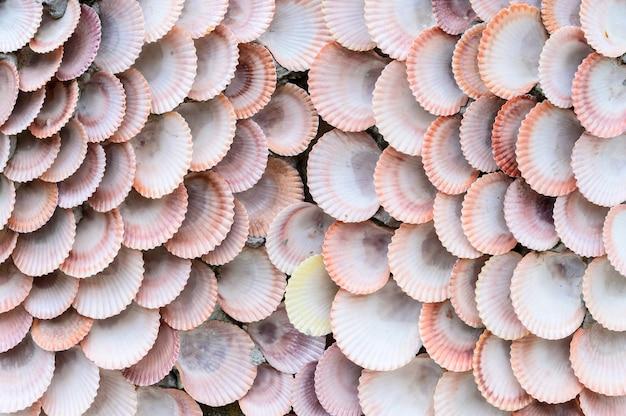Grupo de frutos do mar e amêijoas detaill textura de fundo