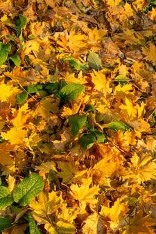 Grupo de fundo folhas de outono laranja