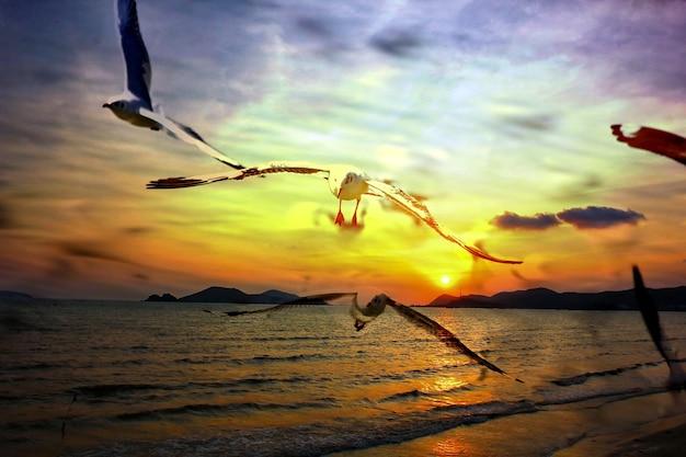 Grupo de gaivota voando com o pôr do sol vista do mar, colorido, beleza, céu, natureza, fundo