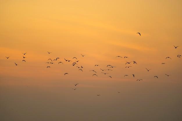 Grupo de gaivotas de silhueta voando sobre o mar de manhã.