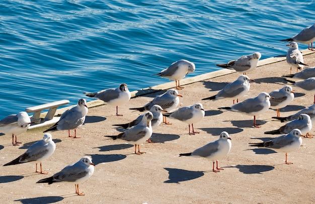 Grupo de gaivotas ou gaivotas em pé na costa no fundo da água do mar azul