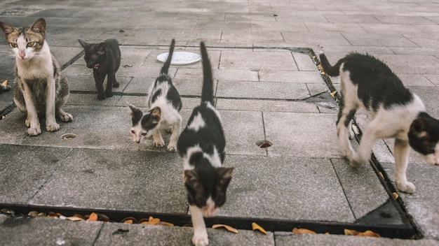 Grupo de gatos de rua fofos e gatinhos