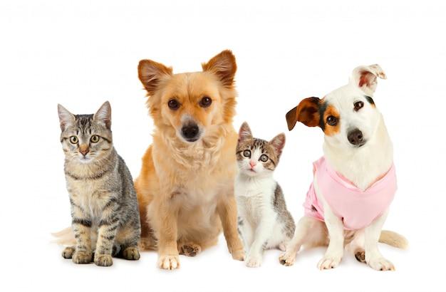 Grupo de gatos e cachorros