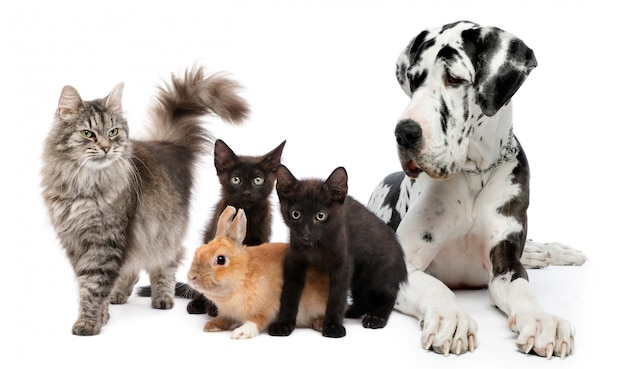 Grupo de gatos e cães e coelho