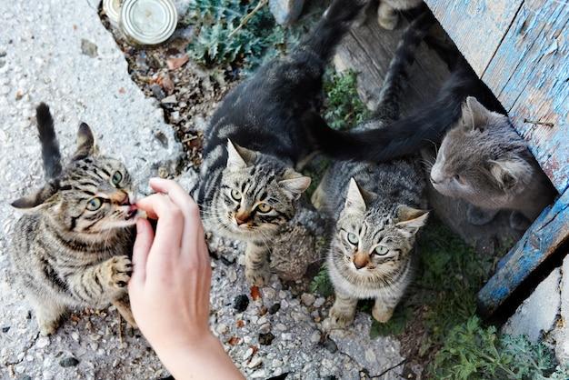Grupo de gatos selvagens com listras pretas e cinzas