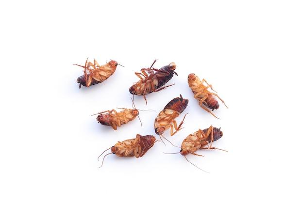 Grupo de insetos baratas secas mortas isoladas na vista superior de fundo branco