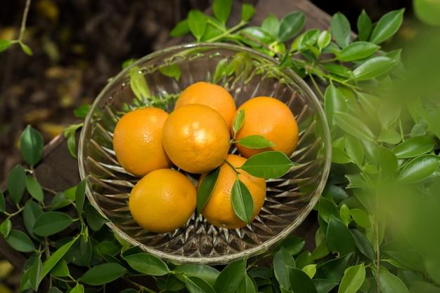 Grupo de laranjas recém colhido e seção em uma cesta
