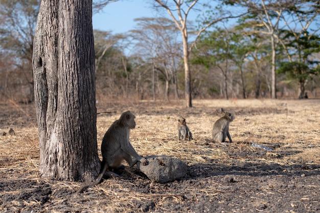 Grupo de macaco