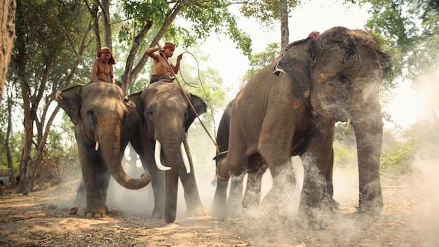 Grupo de mahouts e elefantes na floresta