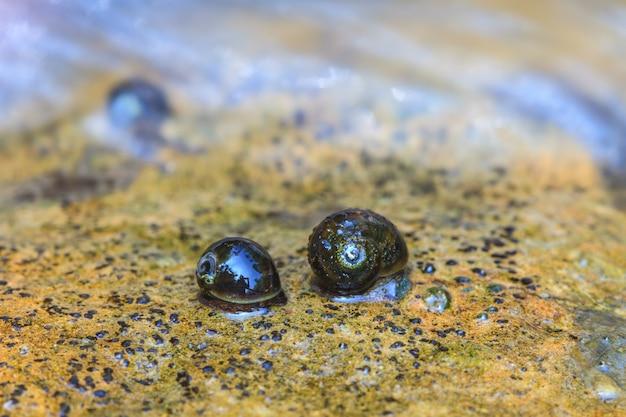 Grupo de mexilhões e conchas de mexilhão nas rochas