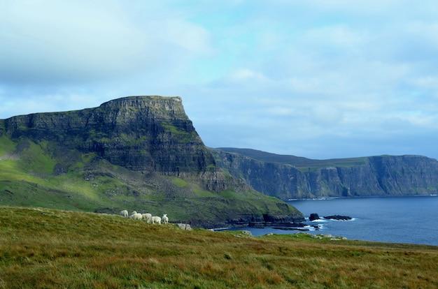 Grupo de ovelhas pastando nas terras altas da escócia em neist point