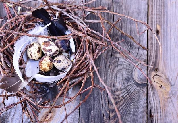 Grupo de ovos de codorna em um ninho de galhos em uma superfície de madeira cinza