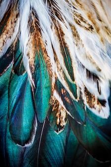 Grupo de penas coloridas brilhantes de algum pássaro