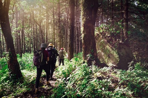 Grupo de pessoas, caminhadas que estão viajando na floresta verde, brilhando a bela natureza do sol. é um foco suave.