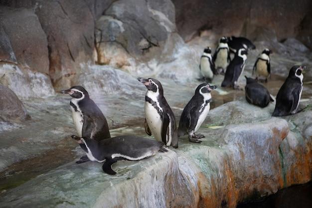 Grupo de pinguins em uma rocha no zoológico