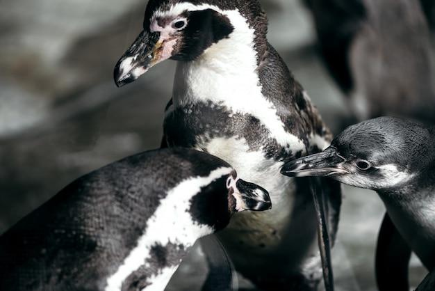 Grupo de pinguins no zoológico posando